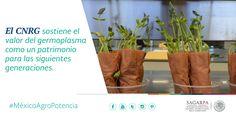 El CNRG sostiene el valor del germoplasma como un patrimonio para las siguientes generaciones. SAGARPA SAGARPAMX #MéxicoAgroPotencia