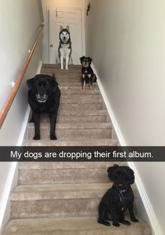 My dogs are dropping their first album