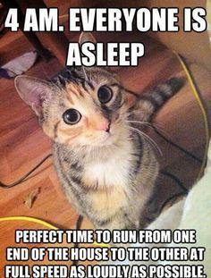 Is stampy cat hookup sqaishey instagram quotes