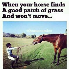 This is so true but at least my other horse doesn't do that