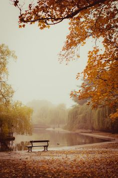 Silence ~ Autumn in Rowntree Park, Yorkshire, England