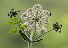 June flora