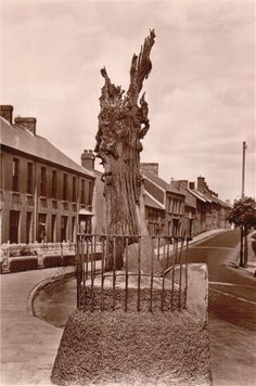 """Merlin's Oak stood in the centre of Carmarthen amid the legend that King Arthur's famous wizard had placed a protective curse on it.  In local tradition, the wizard said Carmarthen would """"drown"""" if the oak was ever removed, and some even said a curious, pointed notch in the tree was the face of Merlin himself. It was removed from the town when someone set it on fire at the end of the 1970s.  Carmarthen then suffered its worst floods for many years. Legend Of King, Sword In The Stone, Legends And Myths, Cymru, King Arthur, Places Of Interest, In The Tree, South Wales, Merlin"""