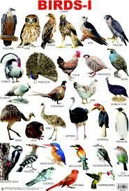 Birds Pictures And Names