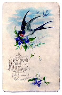 Flying Swallow with Violets