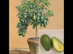 El bicarbonato de sodio puede ser muy util para las plantas de tu jardin o flores - YouTube