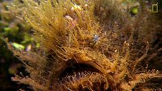 Watch this frog fish lure its preyand don't blink https://t.co/Sj4rHMqS8n #hairtransplant #hairturkey #hairtransplantturkey #hairtransplant #hairturkey #hairtransplantturkey #hairstyle #hairnews #hair #hairloss