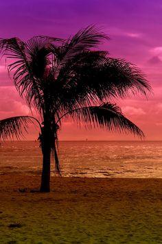 ✮ Palm tree on Point Pleasant Beach, New Jersey