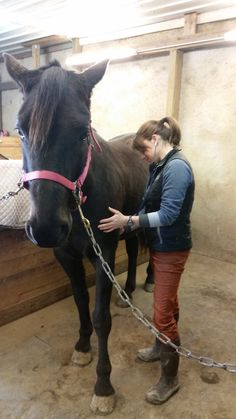 Top 7 Conditions Found During Equine Annual Wellness Exams  #equifirstaidusa #horse #firstaid #horses #efa