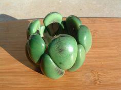Tagua nut drops chunky bracelet bright by OrganicjewelrybyAlli, $24.00 Plus Size Beach Wear, Stretch Bracelets, Beaded Bracelets, Green Organics, Simple Black Dress, Colorful Bracelets, Just The Way, Statement Jewelry, Irish