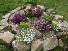 Blooming rockery by Owl lover