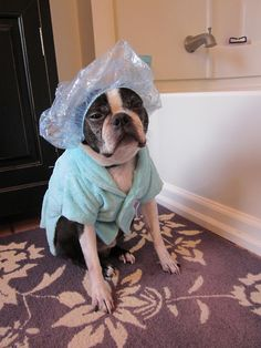 pampered BT Wendell on spa day better not show this to my daughter or she will do this to our bt