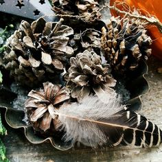 Give us feathers and pine cones and we will always be happy. . . . . . . . http://ift.tt/2i0lmL9 Visit www.ruralmag.com a free online magazine for #midlife women. It's not where you live it's how.