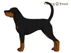 Furry Paws // CCT {HEX} Black Label |24HH lala 4cha|Black with Rich Tan Points *Best of Breed x7*'s Kennel
