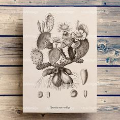 #LizasDigitalVintage Botanical print Cactus art print Printable by LizasDigitalVintage