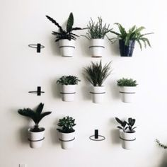 Indoor plant wall with planters and wall planter hooks from crate and barrel. Indoor Plant Wall, Plant Wall Decor, Indoor Plants, Hang Plants On Wall, Wall Plant Pot, Hanging Plant Wall, Diy Hanging, Indoor Living Wall, Hanging Wall Planters Indoor