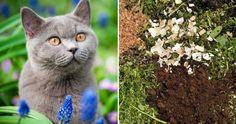 Varför ska man lägga kaffesump i trädgården egentligen? Vi förklarar, det är bra för mycket! Garden Weeds, Farm Gardens, Pest Control, Land, Animals, Compost, Animales, Animaux, Animal