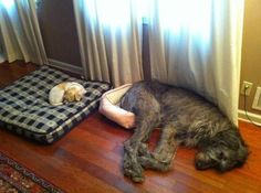 Big dog in a little bed, little dog in a big bed...