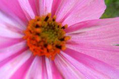 Garden flowers - Extreme closeup - 210