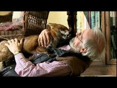 Spoiler alert: The fox doesn't actually talk. BUT his owner, a charming elderly chap, describes the noise he makes (purring!), and then gives him a bath and DRIES HIM WITH A BLOWDRYER.