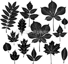 Set of silhouette leaf
