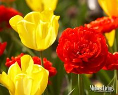 Decorate Your Desktop With Our Garden Photos | Midwest Living