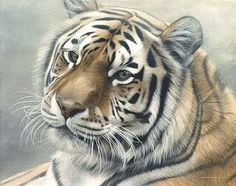 Siberian Mist - Siberian (Amur) Tiger - Limited edition giclée watercolour paper print of Siberian Mist is available for $199.00 framed. Image size of print is 10 x 12.75. Image size of original is  by Michael Pape
