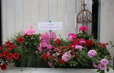 Musterkästen für Balkonblumen