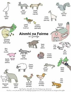 Ainmhí na Feirme (Animals of the Farm) Irish Gaelic Language, Gaelic Words, Celtic Pride, Irish Celtic, Ireland Language, Scottish Gaelic, Gaelic Irish, Irish People, Irish