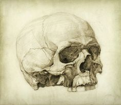 Illustration about Human skull drawing. Pencil on paper & vintage processing. Illustration of face, study, drawing - 22003426 Life Drawing, Figure Drawing, Academic Art, Anatomy For Artists, Drawing Studies, Skull And Bones, Art Plastique, Skull Art, Art Sketches