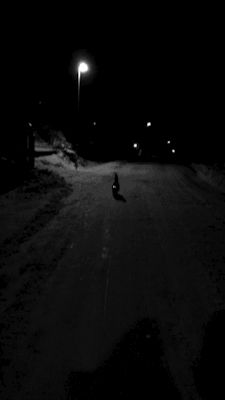 my gif gif kitty cat snow funny cute adorable time night kitten dark nature cat gif norway cute cat adorable cat kitty cat night time my cat funny cat gif cat cat picture cat funny cat adorable norway cat cat norway time night snow nature snowy nature