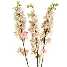 Larkspur Light Pink Flower