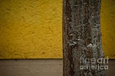 I like to focus on texture and color to create almost abstract photograph... isn't that tree beautiful? Varadero, Cuba (May 2014) © Audrey Wilkie