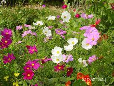 Top 10 Drought Gardening Ideas! #garden birdsandblooms.com