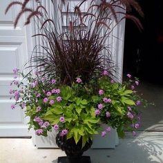 fountain grass, lantana, and potato vine. If only my lantana would look like this.  It is a lovely combination but my lantana has a long way to go.