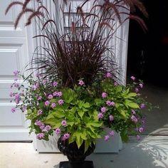 fountain grass, verbena, and potato vine
