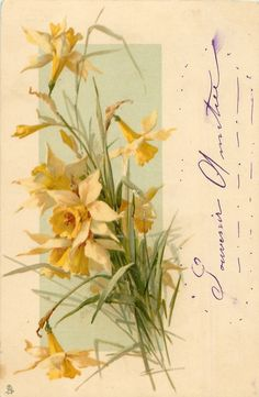 Yellow & white daffodils, with French message in purple ink
