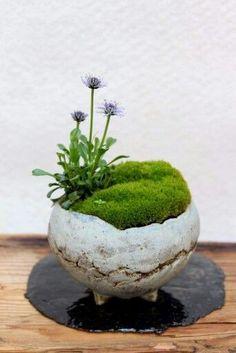 Indoor Gardens For Your Home Dish Garden, Garden Art, Garden Plants, Deco Floral, Arte Floral, Indoor Garden, Indoor Plants, Art Floral Japonais, Arrangements Ikebana