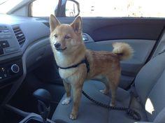 taro shiba, front seat rider.
