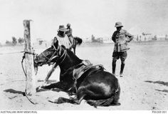 Australian poet at war: Egypt. Captain Andrew Barton 'Banjo' Paterson (right) of Remounts, Australian Imperial Force, inspects a sulking horse Memphis City, Indian Army, Cairo Egypt, World War One, British Colonial, World History, Wwi, Romans, Famous People