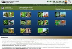 AMERICAS FORESTS PROVIDE ECOLOGICAL, SOCIAL. & ECONOMIC  GROWTH  AND SERVICES TO OUR NATION