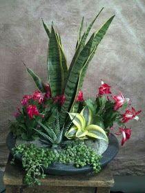 45 Brilliant Succulent Garden Ideas For Backyard Deko mit Suculentas Succulent Arrangements, Cacti And Succulents, Planting Succulents, Planting Flowers, Flowers Garden, Indoor Garden, Garden Pots, Indoor Plants, Dish Garden