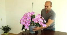 Hogyan neveljünk orchideát cserépben? Propagation, My Flower, Container Gardening, Abs, Plant, Orchids, 6 Pack Abs, Container Garden, Six Pack Abs