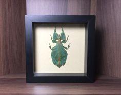 Phyllium Giganteum y un escarabajo joya La por InsectGuru en Etsy