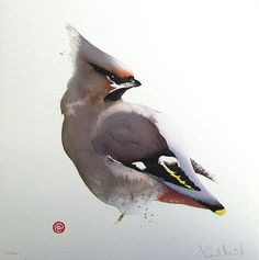 Waxwing by Karl Martens, American born painter (b.1956). Watercolor