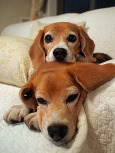 Dieren en hun manieren - Let's talk together - Groepspraat