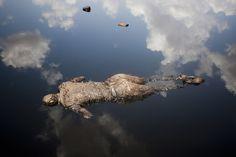 Um soldado das Forças Armadas do Sudão está morto em uma poça de vazamento de óleo perto de uma instalação petrolífera. Foto: Dominic Nahr.