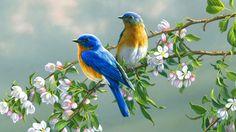 Znalezione obrazy dla zapytania birds