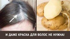 1. Очистить 5 картофелин и варить кожуру до кипения 5–10 мин.2. Слить воду, залить варёную кожуру 2 ст. воды и варить до кипения ещё 5 мин.3. Дать воде остыть, затем процедить её. Перелить в миску, добавить ароматическое масло типа розмаринового или лавандового.4. Помойте седые волосы этим средством — и вас ждёт сюрприз!.Вотрите эту смесь в волосы и кожу головы. Седые волосы почти мгновенно станут чёрными.