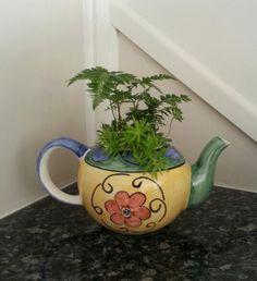 Pot plant idea!